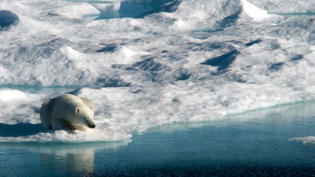 A polar bear suns herself on an ice floe on Baffin Bay in Nunavut. Clyde River Supreme Court victory