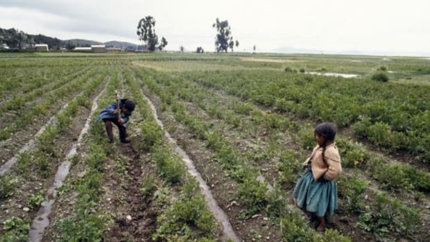 Most nations have laws that prohibit child labor. Yet throughout the world, children in large numbers can be seen toiling in sweatshops, hauling concrete, tilling fields, plucking garbage or peddling shoes. The work is often backbreaking for many children of agricultural families. Agriculture, in fact, employs the majority of the world's working children.