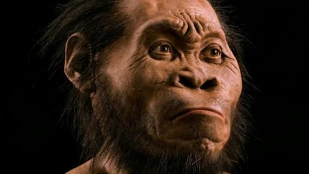 While primitive in some respects, the face, skull, and teeth show enough modern features to justify H. naledi's placement in the genus Homo. Artist Gurche spent some 700 hours reconstructing the head from bone scans, using bear fur for hair.