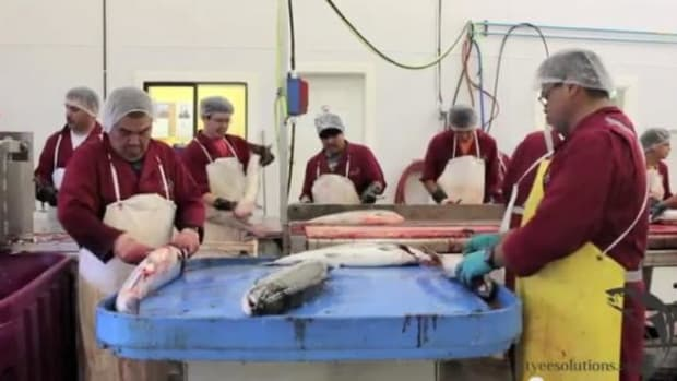 Take a tour of the N'usi fish processing plant.