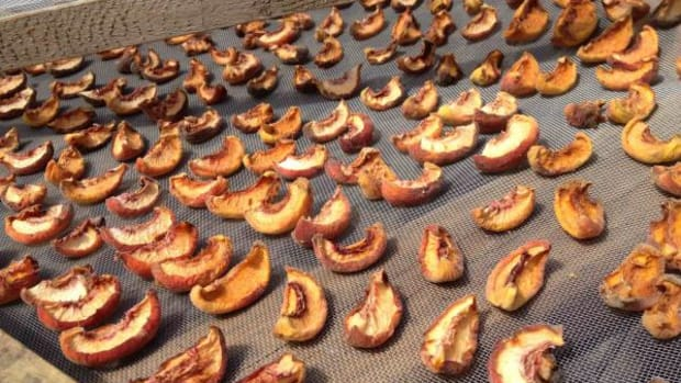 Peaches drying on our homemade drying racks at Darla Antoine's home in Costa Rica's highlands (Darla Antoine)