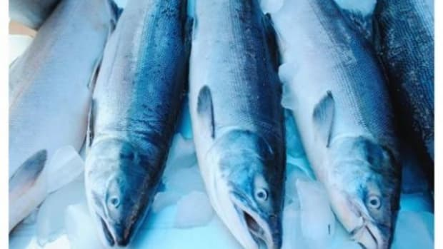Salmon being tested for radiation from Japan nuclear disaster have come up clean