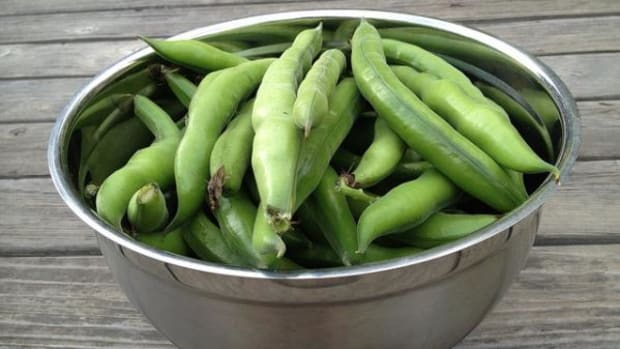 """""""Fava beans are high in protein and fiber. They are also especially rich in vitamin A, vitamin C, potassium and iron. Favas even contain L-dopa, a precursor to dopamine, a neurotransmitter in the brain responsible for regulating mood and libido,"""" says Dr. Andrew Weil."""
