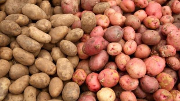 The Russet is the most popular potato in the United States.