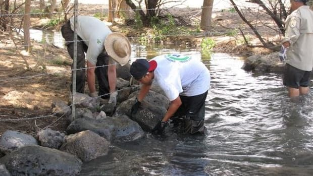 TYCC member Xavier Lovato helps NMFWCO staff member Jason Davis position large rocks in order to stabilize the bank of the lower Santa Fe River as part of a Fish Passage project on New Mexico's Cochiti Pueblo.