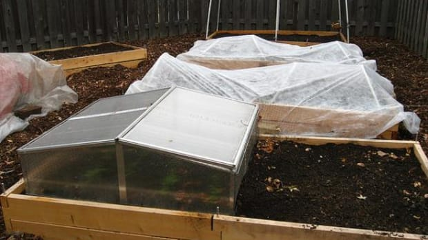 A winter-ready garden with spinach growing beneath the mini-glass house