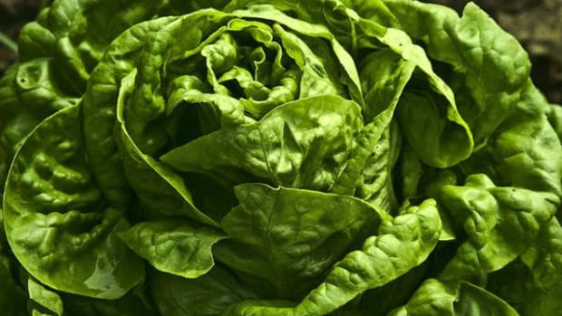 """Lettuce is classified as one of the """"Dirty Dozen,"""" so wash it before consuming. (Photo courtesy of Flickr/Muffet)"""