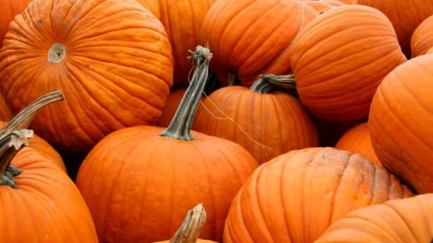 Is orange the new green? So many orange veggies are packed with nutritious benefits, including pumpkins, it sure seems that way.