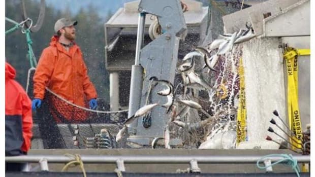 Nuu-chah-nulth First Nations have been thwarted in this year's bid to stop large-scale commercial herring fishing of dwindling stocks.
