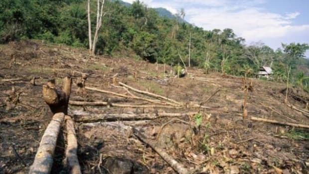 Carving up chunks in the name of deforestation in the Amazon basin