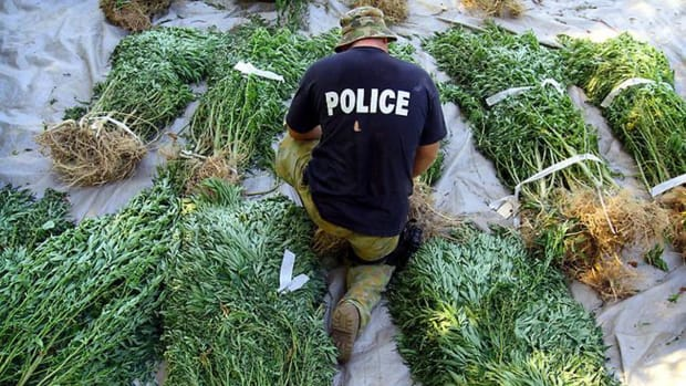 Authorities in California busted a group of men cultivating thousands of marijuana plants on a Native American archeological site.