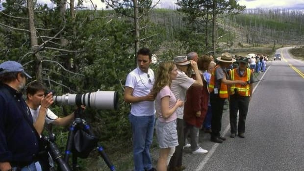 Rangers keep an eye on people at this bear jam in Yellowstone National Park near Sheepeater Cliff. A survey of visitors shows they would be willing to pay $41 more to ensure roadside grizzlies remain an attraction in the world's first national park.