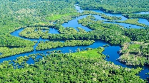A new report says it costs just a few dollars per hectare of forest per year to secure indigenous land rights in the Amazon region.