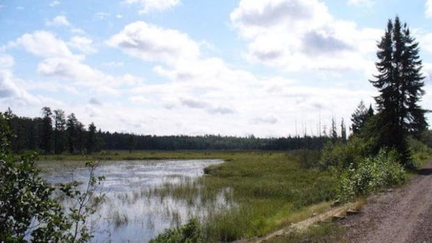 A wild rice stand on the Island River in Lake County, Minnesota on the edge of the Boundary Waters Canoe Wilderness Area, an area where mineral exploration is in play.