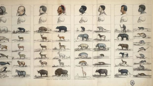 Types-of-Mankind-1854