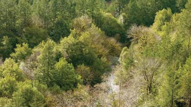 Coquille Indian Tribe lands have been returned with help from Ecotrust.