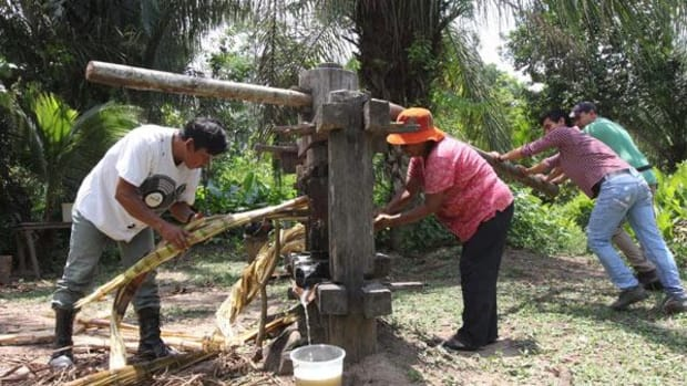 Tourists try their hand at pressing juice from sugar cane in San Miguel del Bala, in the Tacana indigenous territory.