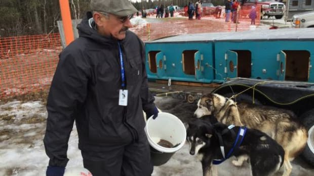 Chuck Schaffer, Inupiaq Native Alaskan, feeds his dogs in Anchorage the day the Iditarod Sled Dog race began.