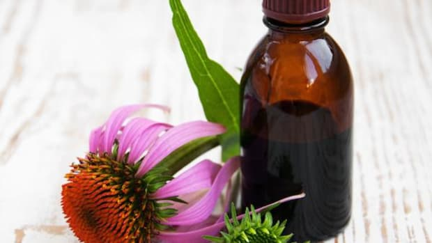 American Indians had already been using echinacea for centuries when Europeans came on the scene.