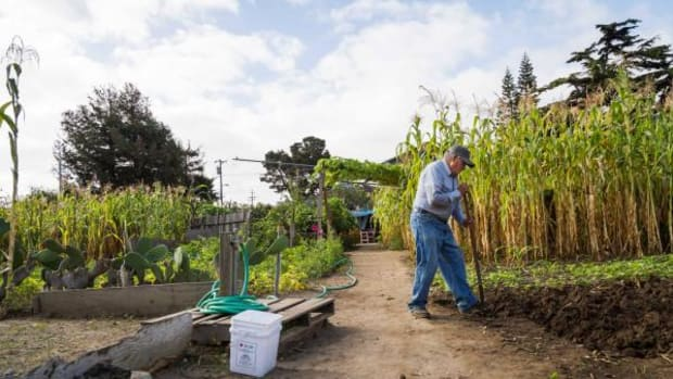 Emilio Martinez Castaneda, one of the original gardeners at the Beach Flats Community Garden, can be found in the garden day and night, tending to the plants. Behind him, 10-foot tall corn, grown from ancient seeds, produces corn of a variety of colors.
