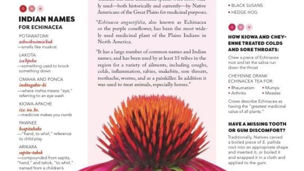 Echinacea, Echinacea page, Issue #1, April-May 2017