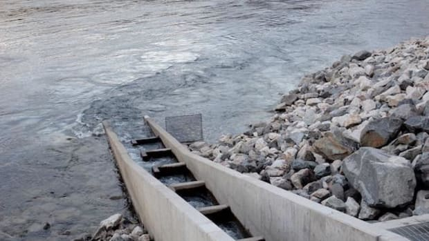The salmon leaped up this fish ladder to the Chief Joseph Hatchery, the first returns since the facility opened in 2013.
