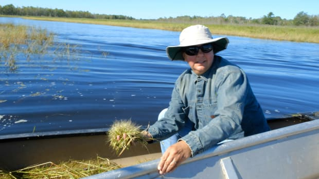 Melanie Connors, Bad River Ojibwe, harvests manoomin in the sloughs of Lake Superior. (Photo by Mary Annette Pember)