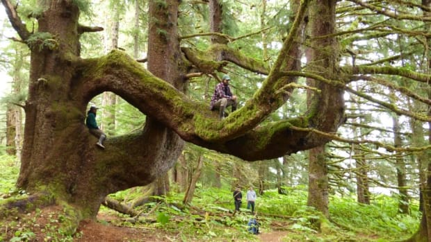 Tree featured in 2014 film, The Meaning of Wild. Kootznoowoo Wilderness, Admiralty Island, Tongass National Forest, Alaska. Forest Service photo by Don MacDougall.