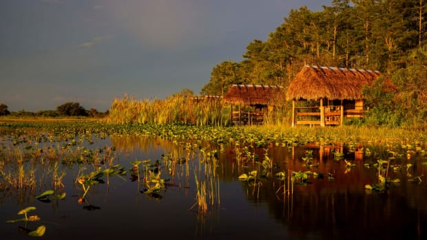 Chickee huts (Photo courtesy of Seminole Swamp Safari)