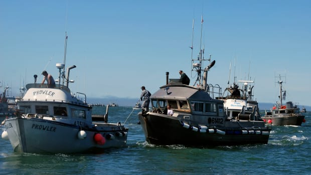 Pictured: In this July 4, 2009, photo, drift gillnet fishing vessels line up near Egegik, Alaska, on Bristol Bay to deliver their harvests of wild Alaska sockeye salmon to fishing tenders.