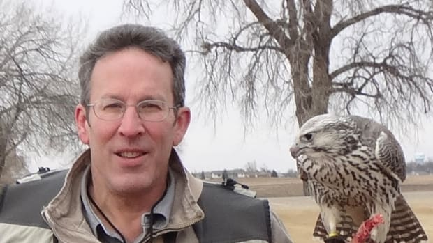 Bill Murrin is the founder and first President of American Falconry Conservancy and presently the organization's legal liaison. (Courtesy image)