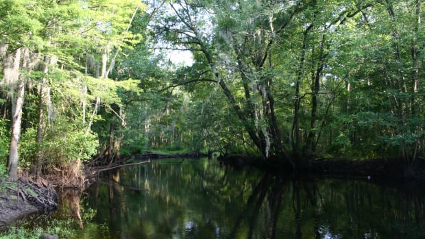 The Little Pee Dee River in South Carolina, is in the traditional homelands of the Pee Dee Indian Tribe. (Photo by Pollinator Courtesy of Wikimedia)