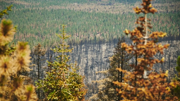The aftermath of the Bootleg Fire—green and blackened areas—is markedly different where thinning and prescribed burns were done in partnership with Tribes and the U.S. Forest Service. (Leah Nash/Underscore.news)