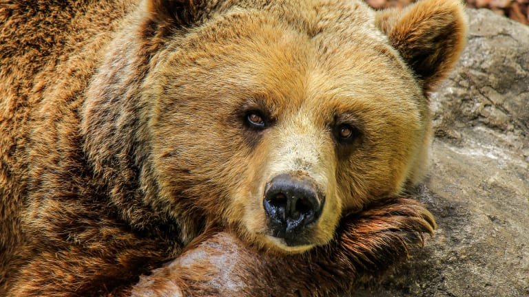 Tribal witnesses emphasize spiritual and cultural significance of grizzly bears