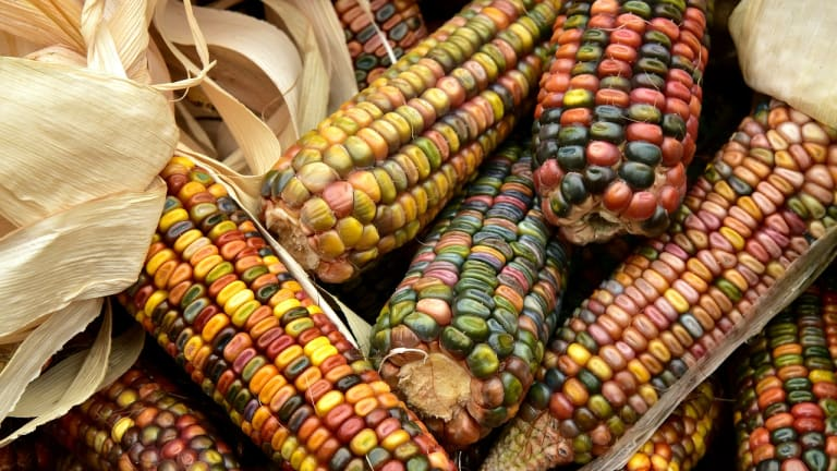 Applications due next month for GATHER Food Sovereignty Grant