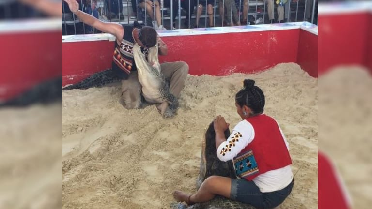 Gator wrestling? Miccosukee American Indian Day showcases airboats and yes, alligators