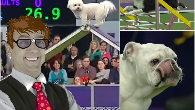 #NativeNerd: My Westminster Dog Show love for agility stars Winky, Rudy and Verb