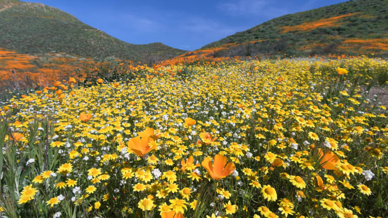 Pechanga Tribe announces $100,000 grant to assist Lake Elsinore with 'super bloom' traffic and public safety