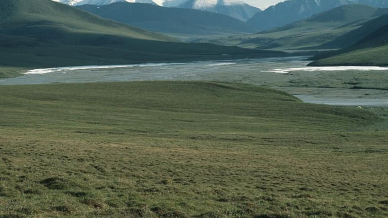 Groups await their day in court after judge rules against injunction in Arctic Refuge case