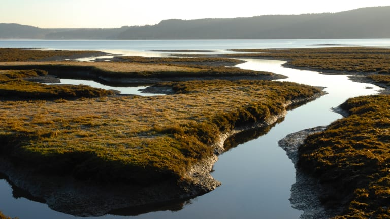 Salish Sea love letter (and a call to action)