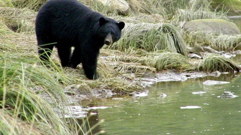 New federal rule undoes bear, wolf hunting restrictions in Alaska