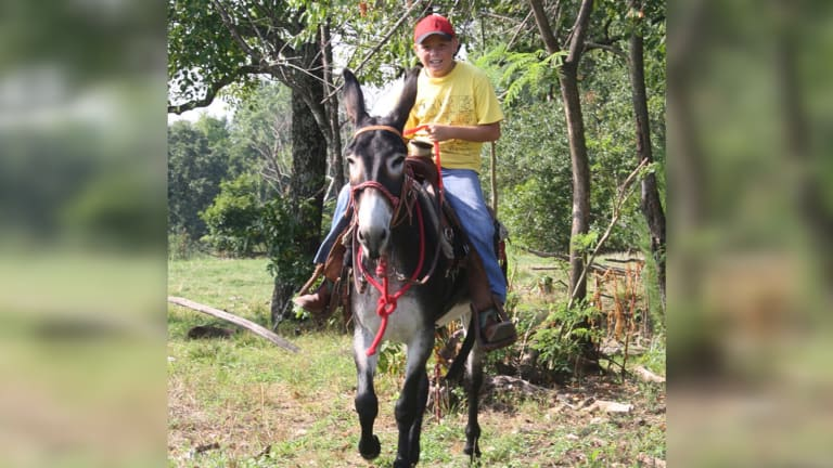 Rare donkey from Cherokee-owned farm immortalized