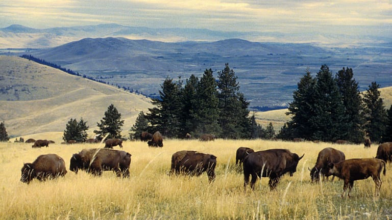 Interior transfers National Bison Range lands in trust for the Confederated Salish and Kootenai Tribes