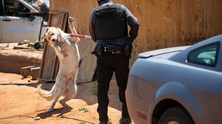 Death highlights free-roaming dogs on tribal land