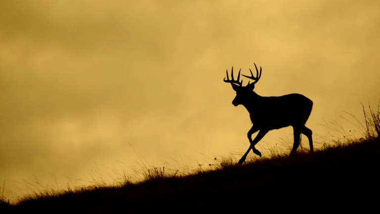 Cherokee Nation Wildlife Conservation to host first controlled deer hunts