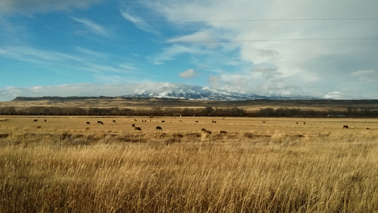 New Montana nonprofit tackles COVID-19 in Native, rural communities
