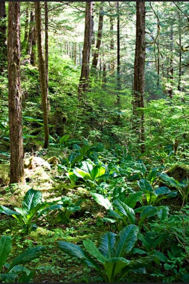 Tongass National Forest (Photo by Seth Andeson, courtesy of Creative Commons)
