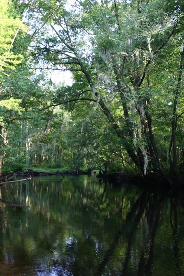 The Little Pee Dee River in South Carolina, is in the traditional homelands of the Pee Dee Indian Tribe. (Photo by Pollinator Courtesy of Wikimedia),