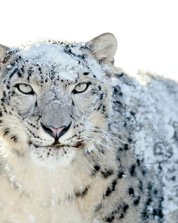 """""""OS X Snow Leopard Wallpaper - Snow Leopard"""" (Photo by Macpedia is licensed under CC BY 2.0)"""