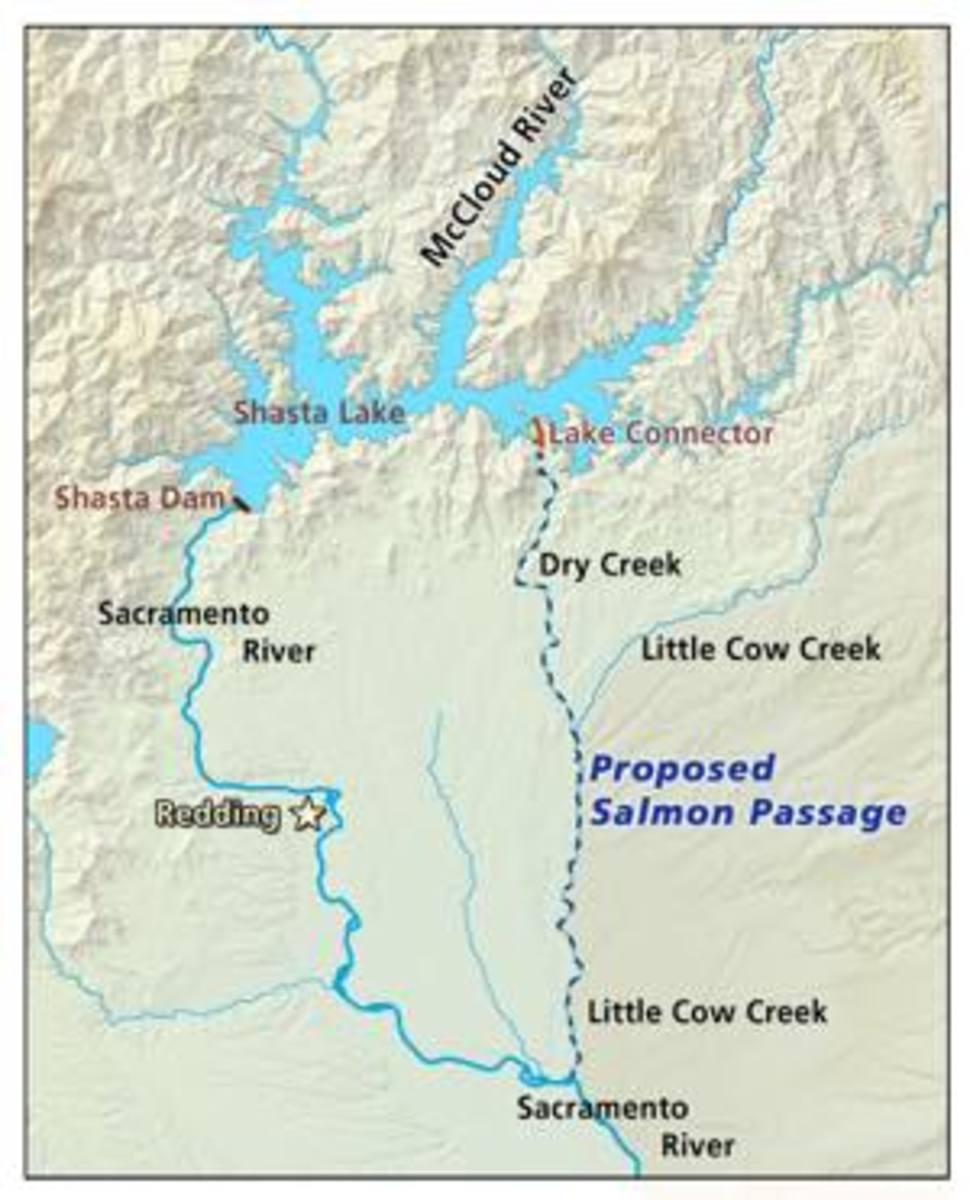 A map of the Winnemem Wintu's proposed swimway for the salmon to travel around Shasta Dam.